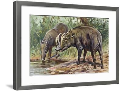 Buru Babirusa or Golden Babirusa (Babyrousa Babyrussa), Suidae--Framed Giclee Print