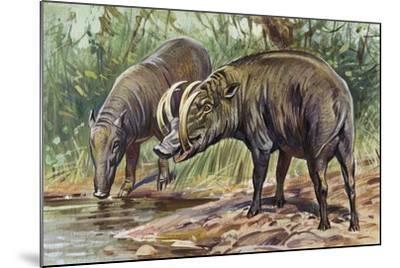 Buru Babirusa or Golden Babirusa (Babyrousa Babyrussa), Suidae--Mounted Giclee Print
