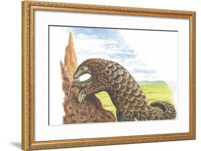 Giant Pangolin Manis Gigantea Catching Ants--Framed Giclee Print