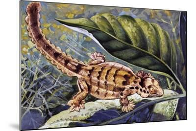 Kuhl's Flying Gecko (Ptychozoon Kuhli), Gekkonidae--Mounted Giclee Print