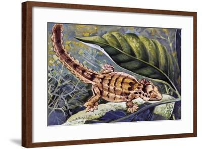 Kuhl's Flying Gecko (Ptychozoon Kuhli), Gekkonidae--Framed Giclee Print