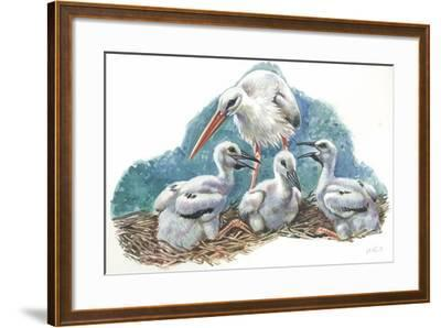 White Stork Ciconia Ciconia in Nest with Youngs--Framed Giclee Print