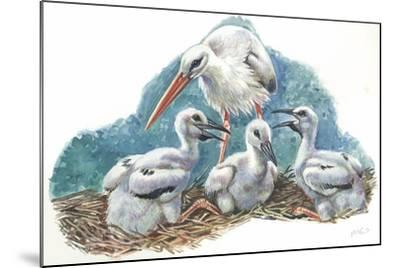 White Stork Ciconia Ciconia in Nest with Youngs--Mounted Giclee Print