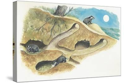 Badgers on a Den (Meles Meles)--Stretched Canvas Print