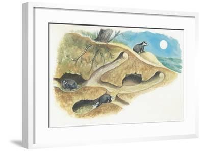 Badgers on a Den (Meles Meles)--Framed Giclee Print