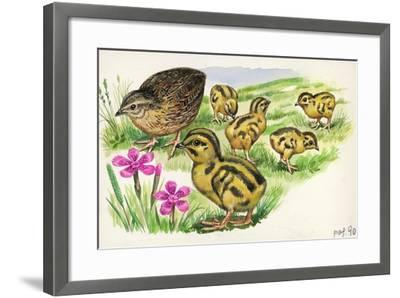Common Quail Coturnix Coturnix with Chicks--Framed Giclee Print