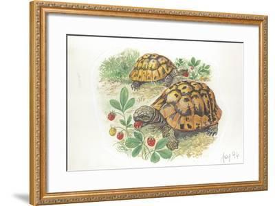 HermannS Tortoises Testudo Hermanni Eating--Framed Giclee Print