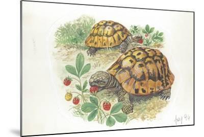 HermannS Tortoises Testudo Hermanni Eating--Mounted Giclee Print