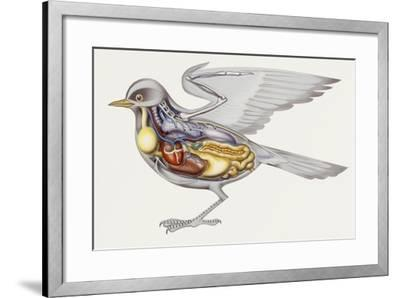Zoology: Birds, Anatomy--Framed Giclee Print