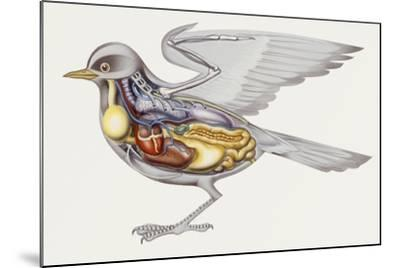 Zoology: Birds, Anatomy--Mounted Giclee Print