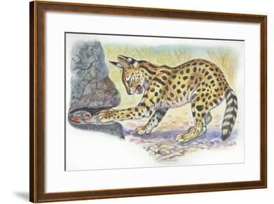Serval Felis Serval Catching Reptile--Framed Giclee Print