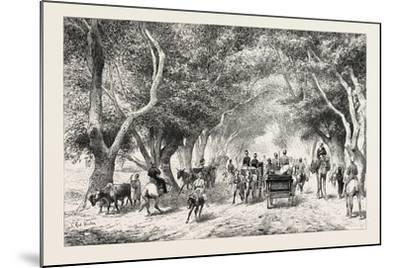 The Avenue at Shoobra, Egypt, 1879--Mounted Giclee Print