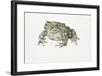 European Green Toad (Bufo Viridis)--Framed Giclee Print