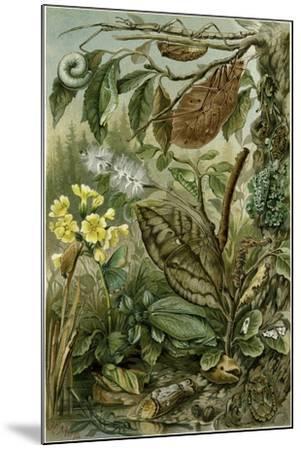 Nature Nineteenth Century Flower Leaves Tree Beetle--Mounted Giclee Print