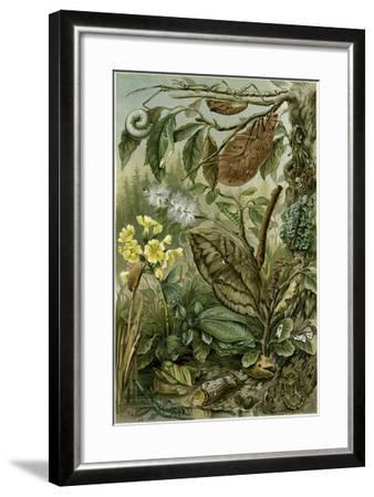 Nature Nineteenth Century Flower Leaves Tree Beetle--Framed Giclee Print