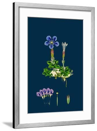Erysimum Orientale; Hare's-Ear Cabbage--Framed Giclee Print