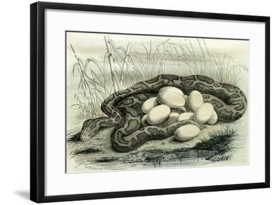 Python Paris Museum, France, 19th Century--Framed Giclee Print