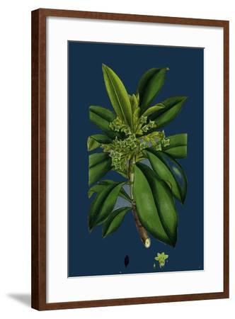 Potentilla Eu-Tormentilla; Common Tormentil--Framed Giclee Print