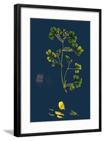 Carex Paniculata; Greater Panicled Sedge--Framed Giclee Print