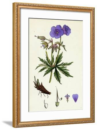 Geranium Pratense Blue Meadow Crane's-Bill--Framed Giclee Print