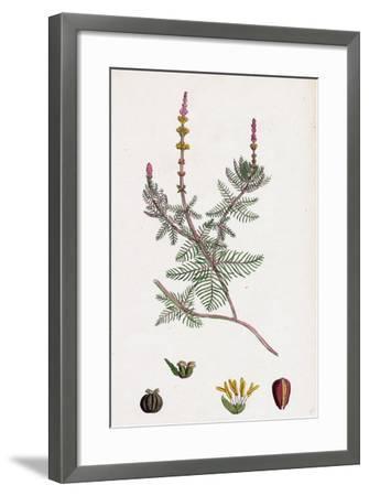 Myriophyllum Spicatum Spiked Water-Milfoil--Framed Giclee Print