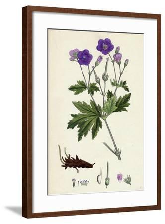 Geranium Sylvaticum Wood Crane's-Bill--Framed Giclee Print