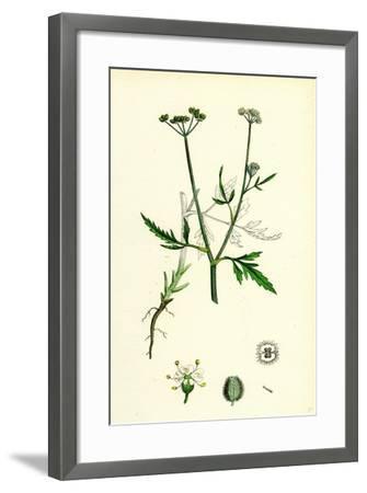 Caucalis Infesta Field Hedge-Parsley--Framed Giclee Print