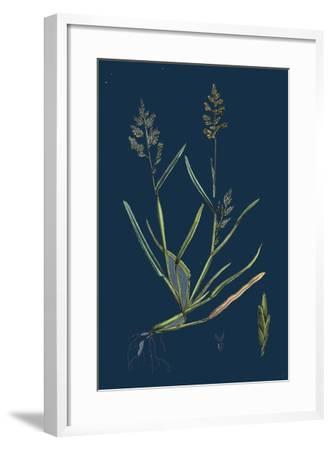 Caucalis Nodosa; Knotted Hedge-Parsley--Framed Giclee Print
