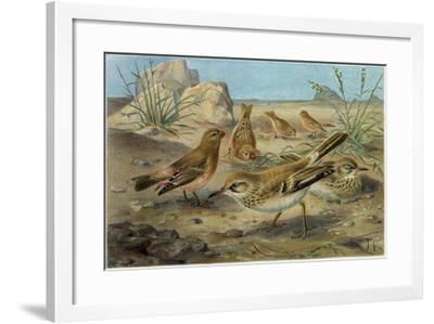 Desert Finch and Desert Lark--Framed Giclee Print
