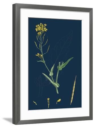 Milium Effusum; Wood Millet-Grass--Framed Giclee Print