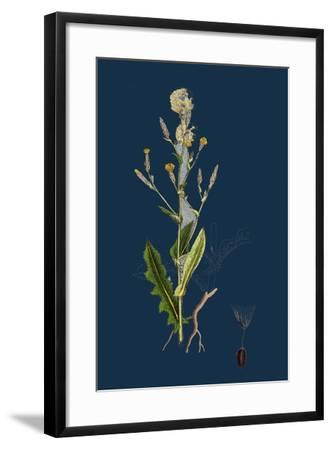 Chenopodium Bonus-Henricus; Allgood--Framed Giclee Print