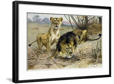 Lion and Lioness--Framed Giclee Print