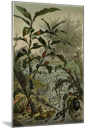 Beetles in a Flood--Mounted Giclee Print