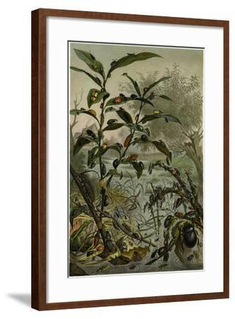 Beetles in a Flood--Framed Giclee Print