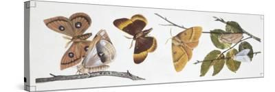 Butterflies Sexual Dimorphism--Stretched Canvas Print