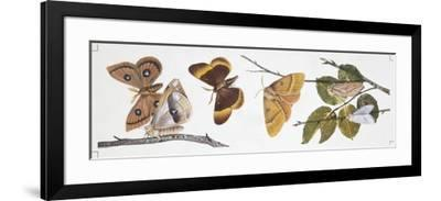 Butterflies Sexual Dimorphism--Framed Giclee Print