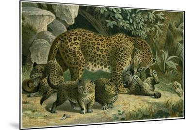 Leopard--Mounted Giclee Print