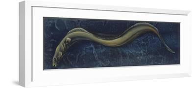 Fishes: Anguilliformes, European Eel (Anguilla Anguilla)--Framed Giclee Print