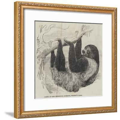 Sloth at the Zoological Gardens, Regent's Park--Framed Giclee Print