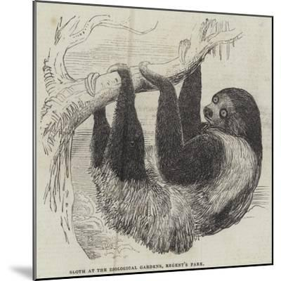 Sloth at the Zoological Gardens, Regent's Park--Mounted Giclee Print