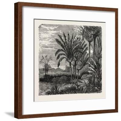 The Travellers Tree (Urania Speciosa)--Framed Giclee Print