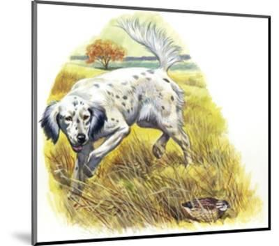 English Setter (Canis Lupus Familiaris) Pointing to Quail--Mounted Giclee Print