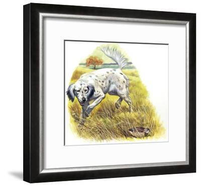 English Setter (Canis Lupus Familiaris) Pointing to Quail--Framed Giclee Print