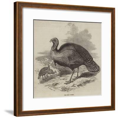 The Wild Turkey--Framed Giclee Print
