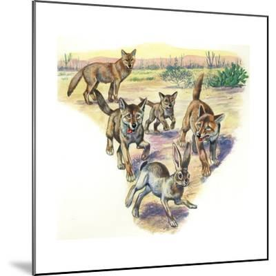 Coyote (Canis Latrans) and Pups Hunting Hare--Mounted Giclee Print