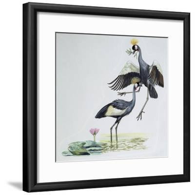 Close-Up of Two Peacocks (Pavo Cristatus)--Framed Giclee Print