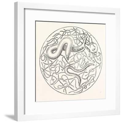 The Grain Worms Vibrio Tritici--Framed Giclee Print