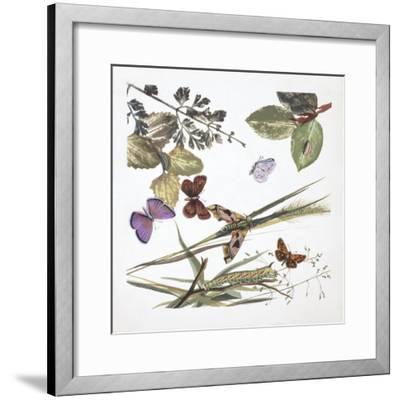 Butterflies--Framed Giclee Print