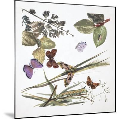 Butterflies--Mounted Giclee Print