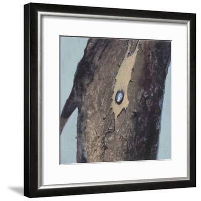 Larva--Framed Giclee Print